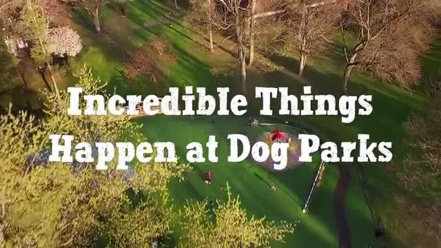 Incredible things happen at dog parks! Beneful has seen first-hand the positive effect that dog parks have on dogs, owners and the overall community over the past six years with the Dream Dog Park program.