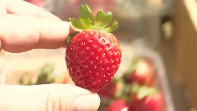 Life of A Strawberry: TV PSA