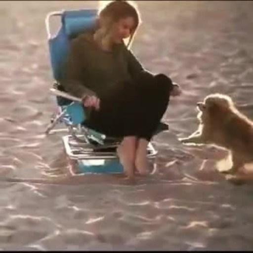 Orbit Beach Chair - SWIVEL BEACH CHAIRS
