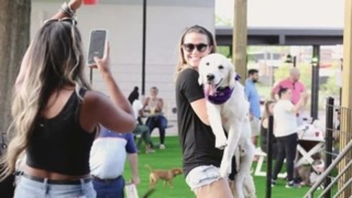 Skiptown, the first-of-its-kind dog social club, is expanding nationally. Video credit: Julia Fay Photography