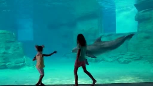 Winter the dolphin has a new home at Clearwater Marine Aquarium