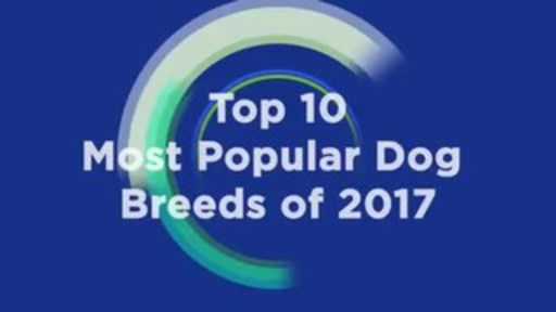 AKC's most popular dog breeds for 2017