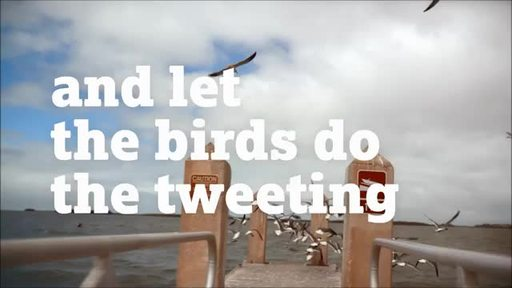 TMF-Let-Birds-Tweet