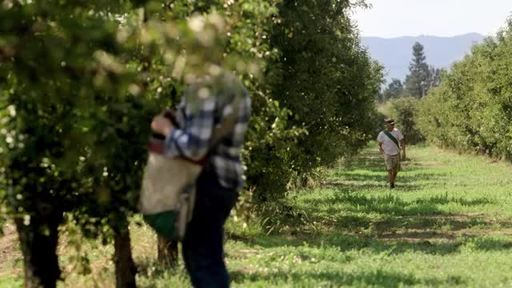 R.W. Knudsen Family gives an insider's look into its quality juice growing practices in a new documentary style video series. This video features Carpenter Orchards, a six generation family-run pear farm that recently shifted its pear crop from conventional to organic farming.