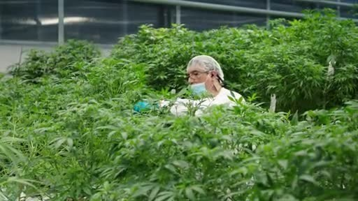 Video: B-Roll of CannTrust's Niagara, Ontario Perpetual Harvest Greenhouse Facility and Vaughan, Ontario Manufacturing Centre