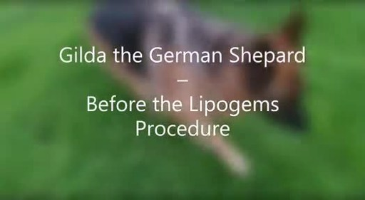 LIPOGEMS: Man's Best Friend Can Achieve Pain Relief and Improved Function from a Medical Device Cleared For Orthopaedics and Arthroscopic Surgery in Humans