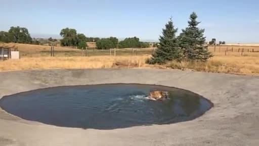 Rescued Hyena Has Joyful First Swim!
