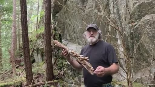 Mycologist and author Paul Stamets celebrates groundbreaking research on the health benefits of Turkey Tail mushroom mycelium. This research further validates mushroom mycelium, along with its fermented substrate, as a uniquely valuable and efficacious nutritional support for healthy immune functioning. Host Defense Mushroom supplements, featuring mushroom mycelium grown by Paul Stamets and his team at Fungi Perfecti, are available at www.fungi.com and retail locations nationwide.