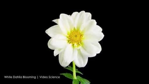 Lorex Video Science