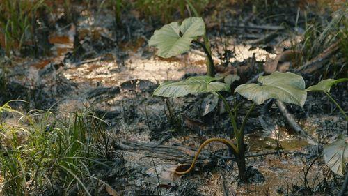 New short documentary The Afectados starring Julie Christie highlights chronic Amazon pollution as oil giant Chevron fights $95 billion fine. (PRNewsFoto/Brass Moustache)