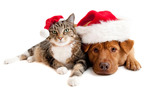Priority Automotive To Help Pay For Pet Adoptions During Holidays