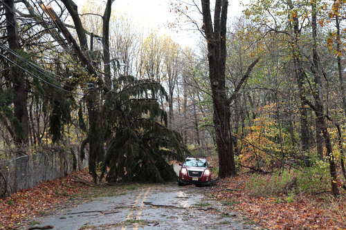 A pine tree broken by the winds of Hurricane Sandy, lies atop JCP&L utility wires, blocking Punchbowl Road in ...