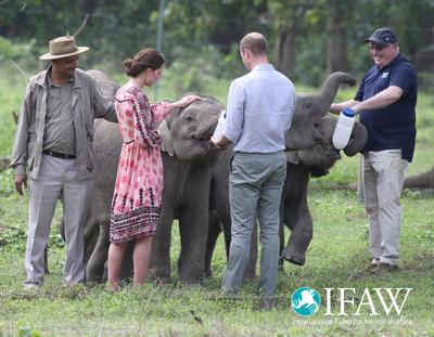 Prince William and Princess Kate bottle fed orphaned elephant calves and baby rhinos at IFAW/WTI's animal rescue center in Kaziranga, India today.