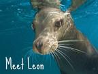 Leon the Sea Lion at SeaWorld