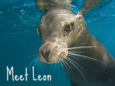 Leon the Sea Lion at SeaWorld