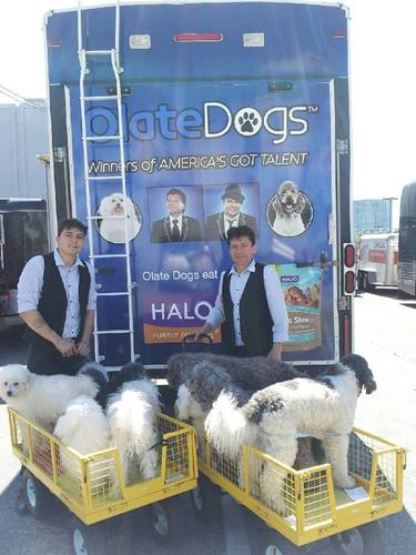 Richard Olate and his son, Nicholas, with the Olate Dogs have partnered with Halo, Purely for Pets to spread awareness about adoption and rescue.  (PRNewsFoto/Halo, Purely for Pets)