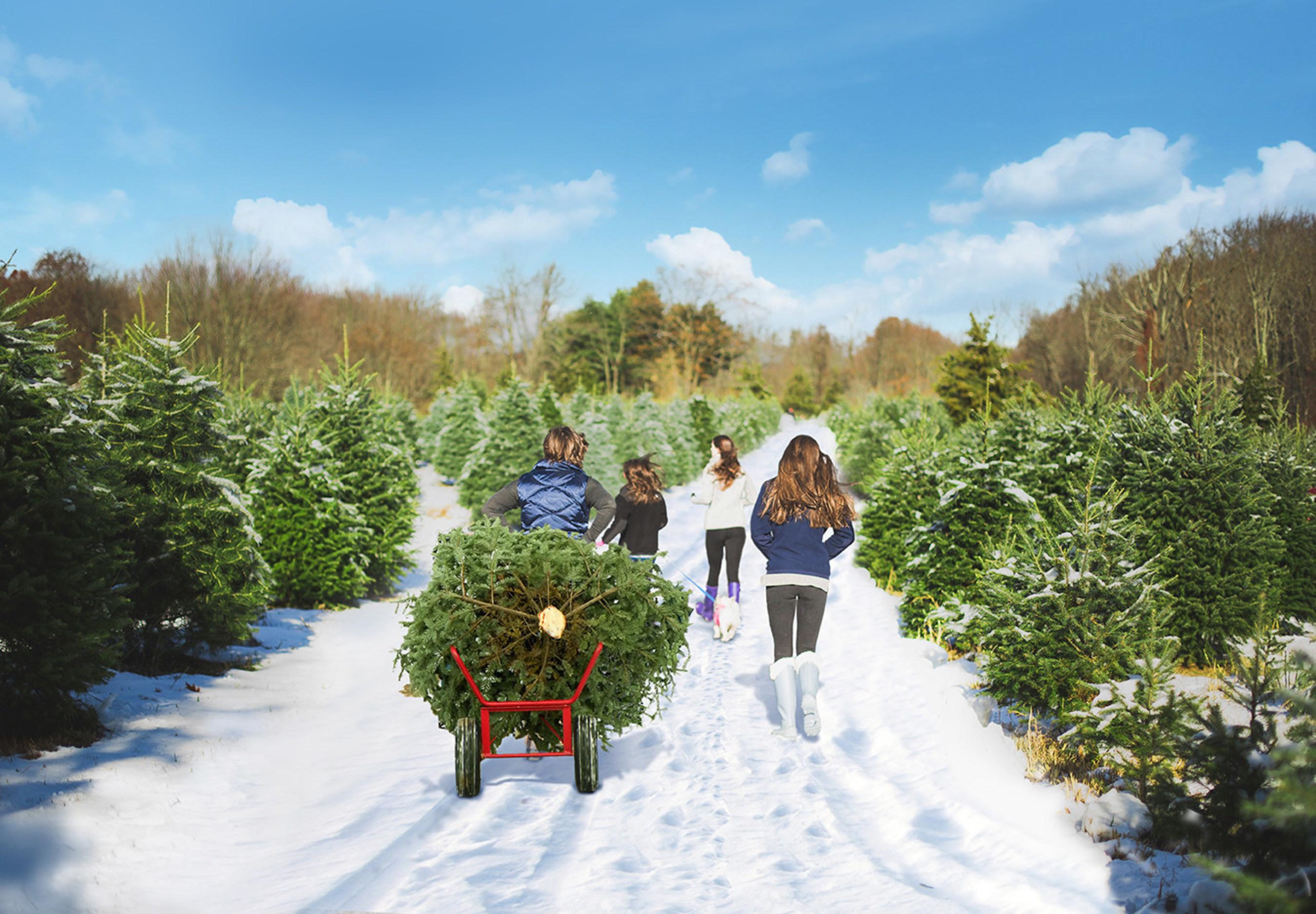 Oak Ridge Tree Farm, Middletown, Conn.