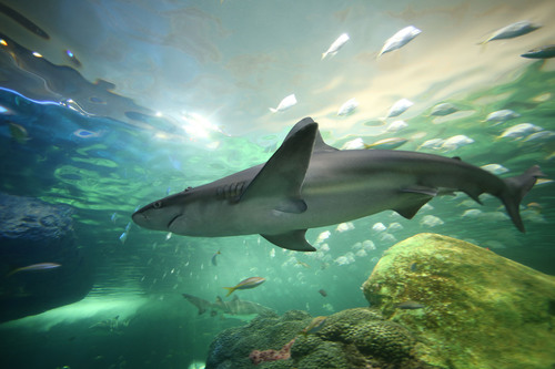 "Ripley's Aquarium of Canada's thrilling ""Dangerous Lagoon"" is a 2.9 million litre underwater ..."