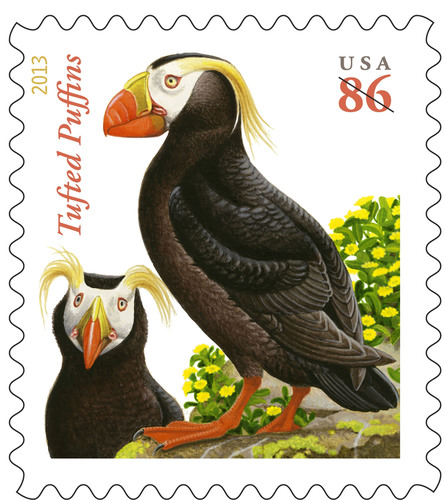 The Tufted Puffin, an unmistakable foot-and-a-half tall bird that hunts to 200 feet underwater and is found on the U.S. coast from California to Alaska, can now be seen nationwide when it takes flight on a new stamp today. The 86-cent Tufted Puffin stamp is good for mailing domestic First-Class letters weighing up to 3 ounces. The stamps can be purchased at usps.com/stamps or by phone at 800-STAMP24 (800-782-6724) and at Post Offices nationwide in preparation for the Jan. 27 price change.  (PRNewsFoto/U.S. Postal Service)