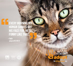Thousands of shelter pets are ready to meet you at TheShelterPetProject.org.  (PRNewsFoto/Ad Council)