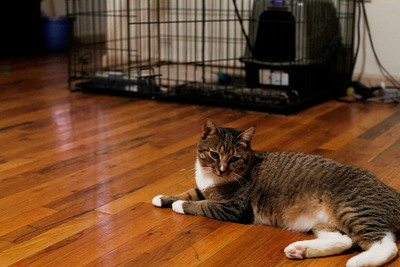 This cat has been living at URI's largest emergency shelter with its owner for the past several months as part of the URIPALS program. (PRNewsFoto/ASPCA, Jordan H. Star)