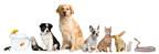 PetProducts.com Animals Group