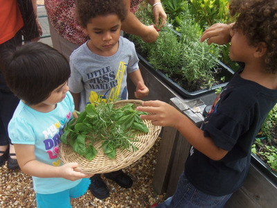 """Container gardening systems, which eliminate hard physical work and can be placed anywhere, are making gardening accessible to young and old alike. The youngsters shown here are part of the Nutrition and Dietetic Club at Hillsborough Community College in Tampa, FL. The program teaches 3- to 5-year-olds about gardening and nutrition. At a weekly """"smelling party,"""" the children pick, identify and taste the herbs they've grown. Chefs at the school's culinary institute use the remaining herbs in their cooking classes.  (PRNewsFoto/EarthBox)"""