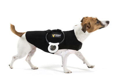Dog photographed with ASSISI-HERO LOOP-AID(R) Torso Wrap and ASSISI LOOP(R)
