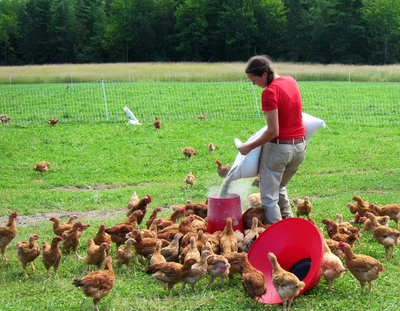 Katia Holmes of Misty Brook Farm in Maine, a 2012 Fund-a-Farmer grant recipient, feeds her laying hens on pasture. The grant from FACT funded fencing to enable pasturing of layers, broilers, sows/piglets.  (PRNewsFoto/Food Animal Concerns Trust)