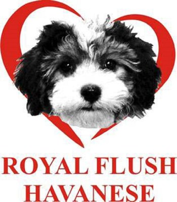 Royal Flush Havanese Logo