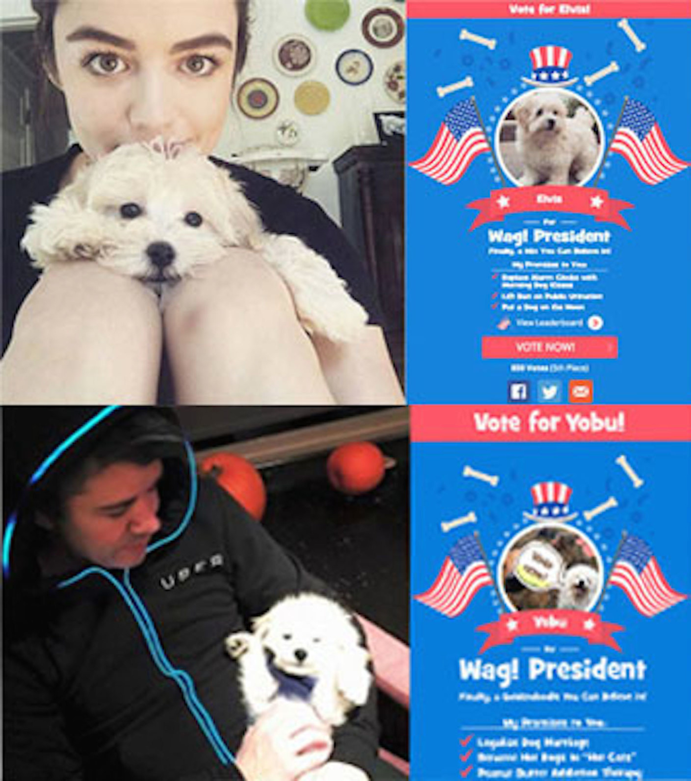 Wag!'s Dog for President Campaign Has Top Celebrities Competing to Have Their Pooches be Top Dog