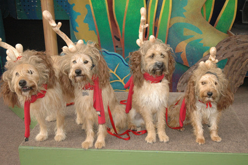 Universal Studios Hollywood's 'Grinchmas' 'Max the Dog' Roles Go to Animals Rescued from Los