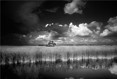 Location: Big Cypress National Preserve, Florida. This photograph was taken on the side of the road and was one of the first black and white photographs Butcher took that encouraged him to change from color photography to black and white film. www.clydebutcher.com