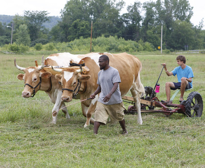 Students at Green Mountain College's summer farm intensive learn to use draft animals in plowing and haying operations. The College is trying to determine if a family farm can operate profitably without use of fossil fuels. (PRNewsFoto/Green Mountain College)
