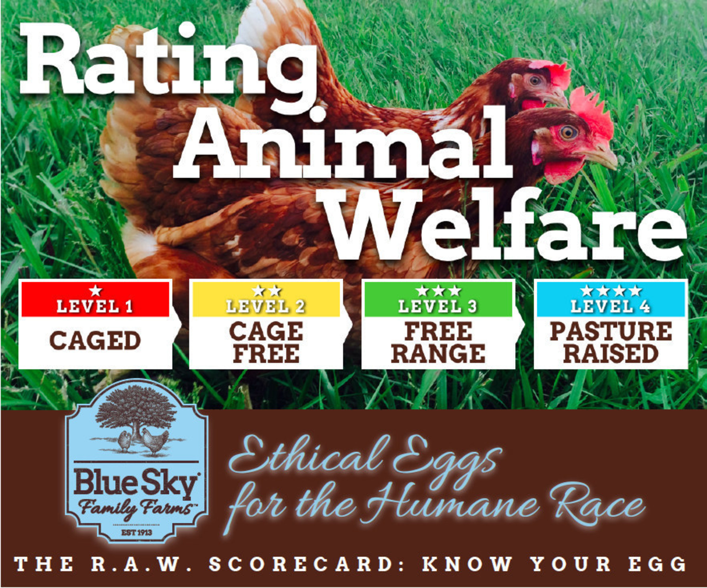 To illustrate the difference and help consumers get to know their eggs, Blue Sky Family Farms introduces the ...