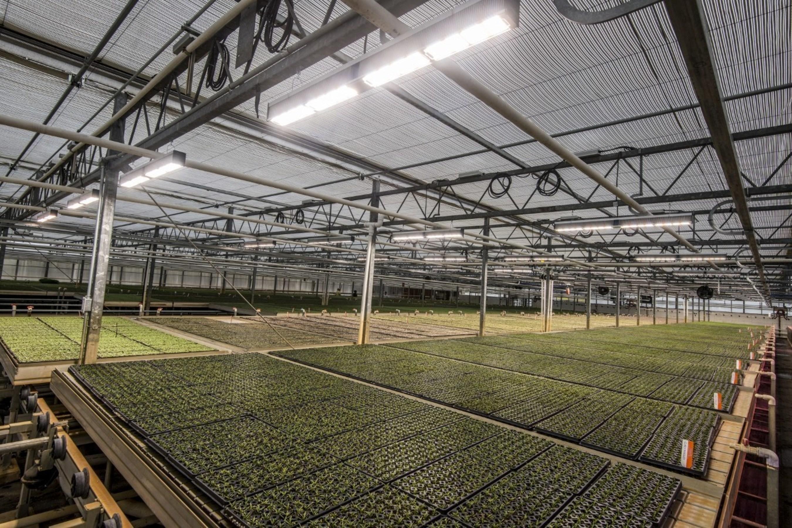 Fluence Bioengineering Achieves Breakthrough in Horticulture
