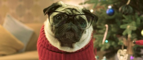 Gizmo the pug saves Christmas in new Vision Direct advert (PRNewsFoto/Vision Direct Europe)