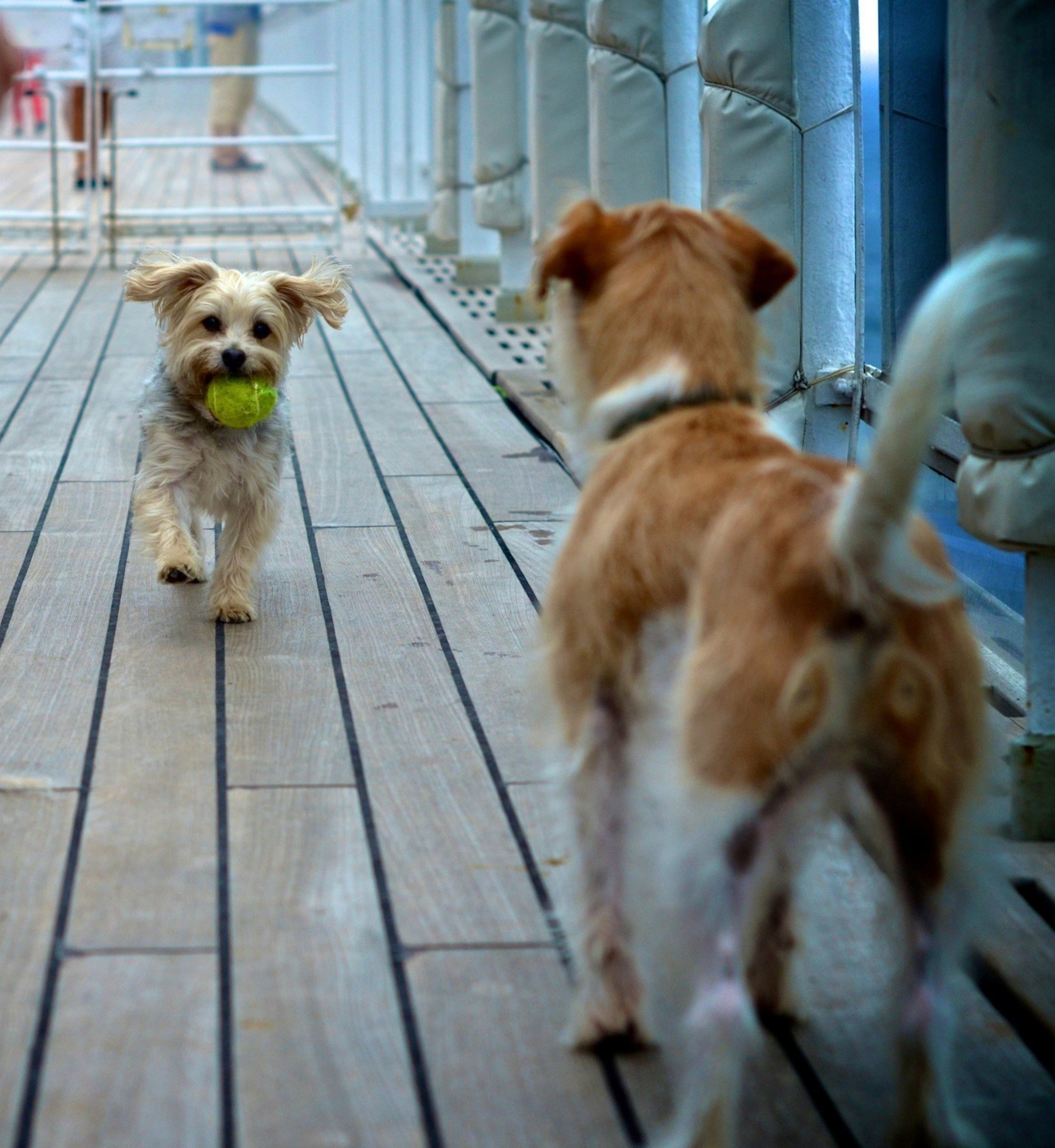 Queen Mary is the only ship in the world to offer dedicated kennels for dogs and cats (photo credit Simone Seckington)