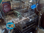North Carolina Animal Hoarding (PRNewsFoto/Address Our Mess)