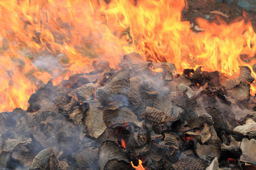 Honduran officials burn hundreds of shark fins. Credit: Javier Maradiaga.  (PRNewsFoto/Pew Environment Group, Javier Maradiaga)