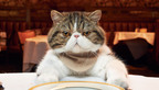 """Merrick Pet Care's Purrfect Bistro Receives Rare """"Five-Paw"""" Review from #TheCatCritic W. """"Mittens"""" Bloomfield. See more of Mittens' insightful reviews at TheCatCritic.com.  (PRNewsFoto/Merrick Pet Care Inc.)"""