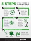 Take Action Against Termites