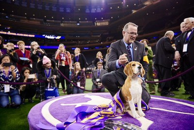 2015 Best in Show winner Miss P, a Beagle, celebrates her victory following the 139th Westminster Kennel Club Dog Show on February 17, 2015, at Madison Square Garden. Miss P is the ninth consecutive Best in Show winner to be fueled by Purina Pro Plan.