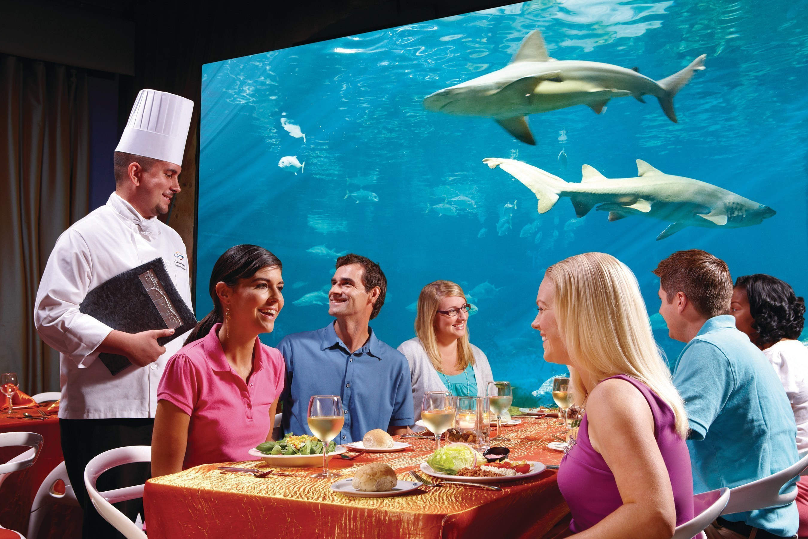 SeaWorld Parks & Entertainment announces a new responsible food sourcing policy that will mean humanely raised and sustainably harvested food at all 12 parks, including SeaWorld, Busch Gardens and Sesame Place. The company is committed to responsibly sourcing food for guests in all park restaurants, including Sharks Underwater Grill at SeaWorld Orlando.