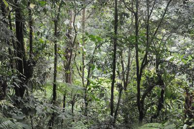 Deep in Rainforest.  (PRNewsFoto/Virgin Rainforest Rescue)