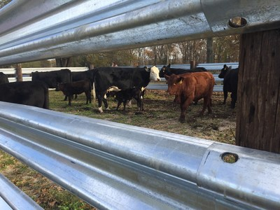"With over 200,000 feet already deployed in only a few months, LiveStock Steel, Agriculture's Own Guardrail, is transforming the Agri-Fencing market with unlimited availability, pristine quality and a solid price ceiling. The American Farmer is praising its improved ease of handling, and seamless integration with used guardrail. Recent clients, Josh and Erika Lamb, of Rollin O Cattle Co. said of the new product,  ""We rest easy when our bull, Brutus, is behind LiveStock Steel.  He's not getting out!""  With used w-beam guardrail being harder to find and serious product shortfalls, LiveStock Steel is the answer for our the American Farmer."