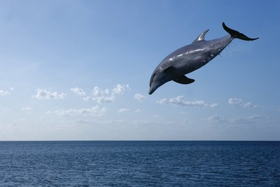 South Padre Island gives visitors close encounters with dolphins