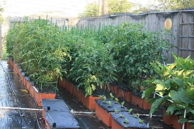 This urban garden of less than 1/10 acre yields 600 pounds of tomatoes a year, plus enough lettuce, eggplant, peppers, herbs and other produce to supply three restaurants and a weekly farmers market. Produce is grown in 111 EarthBoxes and a variety of other containers that save space and provide ideal growing conditions.  (PRNewsFoto/EarthBox)