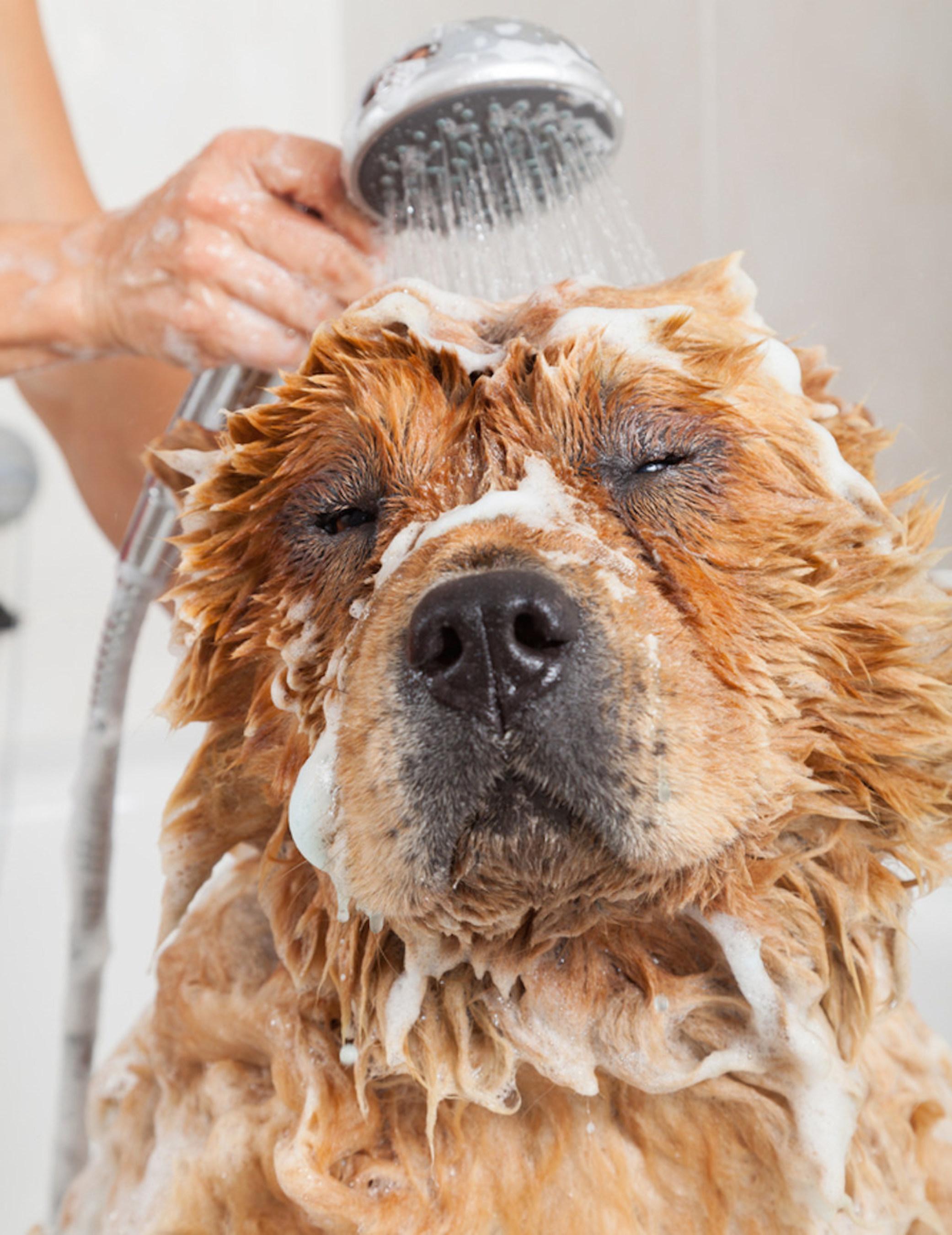 Don't skip wintertime baths