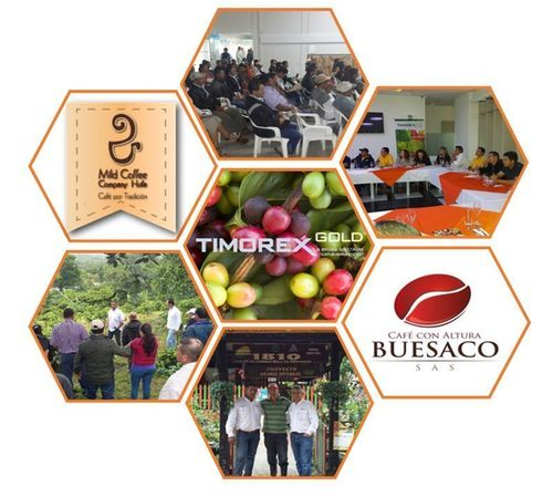 Timorex Gold Biofungicide has been approved by the ICA for Coffee and Maize (PRNewsFoto/Stockton Group)